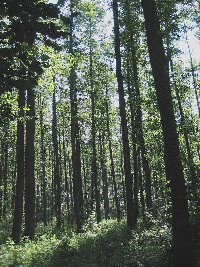 Šuma_Podravina
